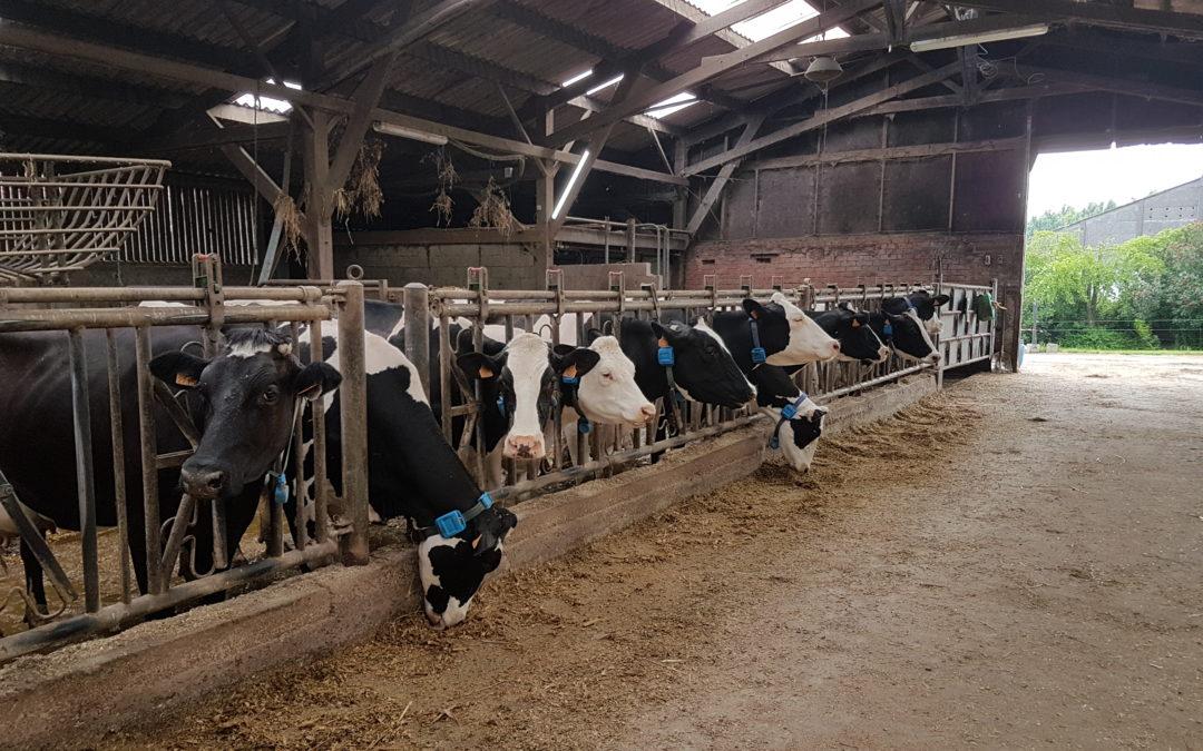 Les CPb en sortie à la ferme