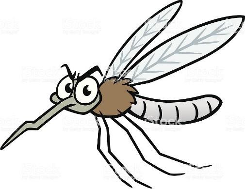 Eradication du moustique «Sleepy»